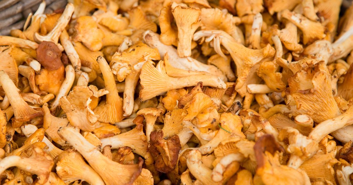 La DGCCRF révèle une contamination radioactive de certains champignons importés