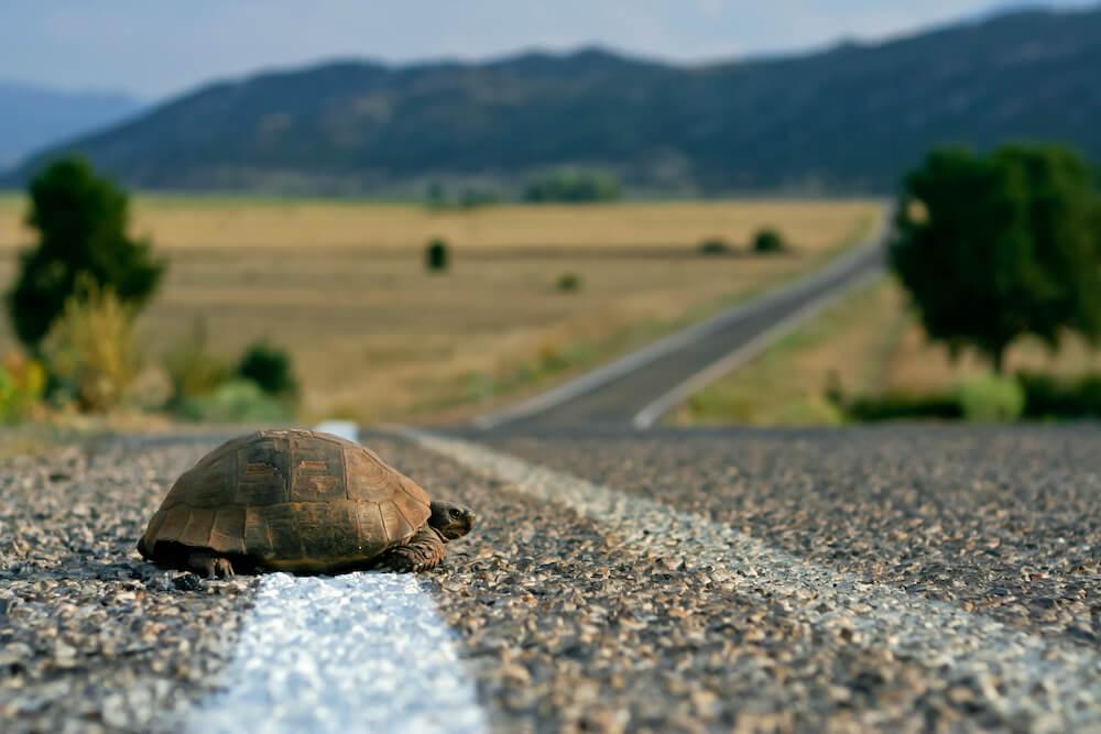 Tortue de conscience de soi sur la route