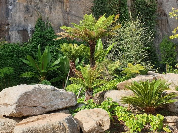 Bananiers, fougères arborescentes , cycas créent au pied de la falaise une ambiance tropicale.